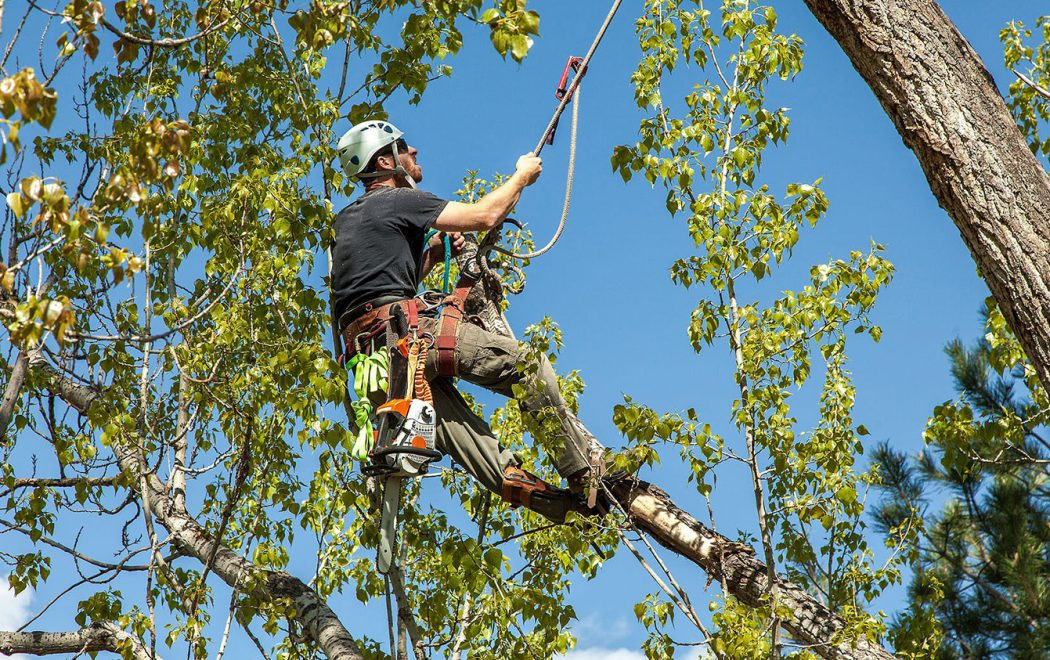 tree trimming services in my area