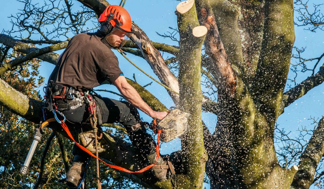 tree service website