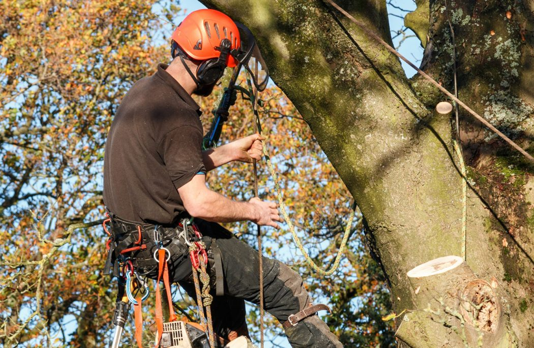 tree removal services in my area