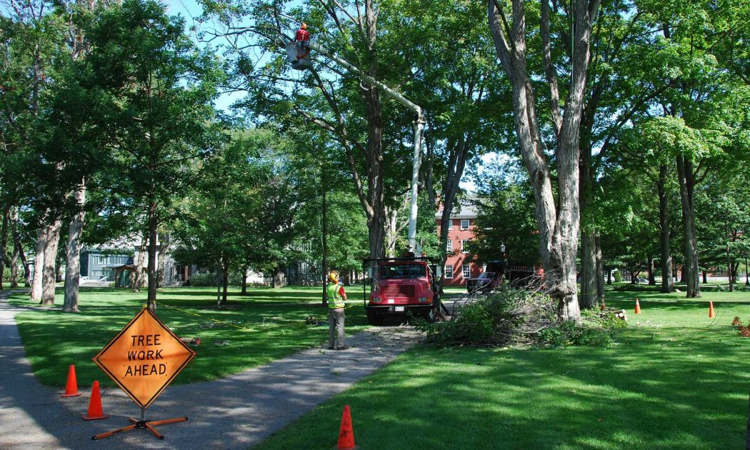 tree-service-companies