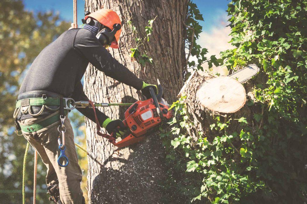 tree service website